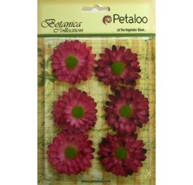 Fleurs 'Petaloo' Botanica Collection' Gerber Daisy Fuschia/Rose Qté 6